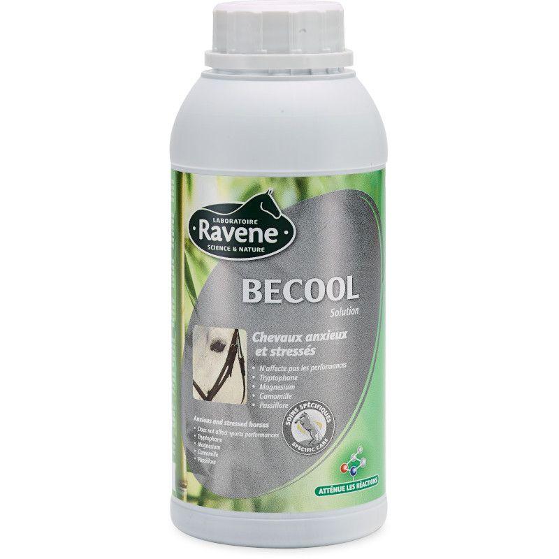 BeCool chevaux Ravene