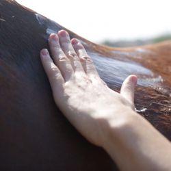 Kinesyl chevaux Ravene