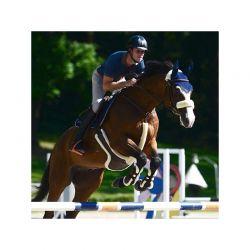 Fly Veil bonnet anti-mouches chevaux Kentucky