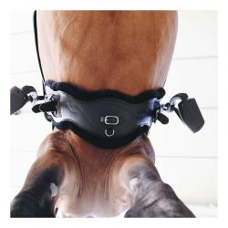 Sheepskin Anatomic Short Girth sangle de dressage anatomique courte en cuir et mouton chevaux Kentucky