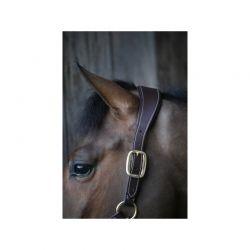 Anatomic Leather Halter licol anatomique chevaux Kentucky