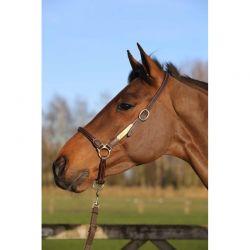 Leather Grooming Halter licol de pansage chevaux Kentucky
