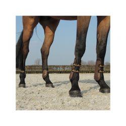 Young Horse Fetlock Boots protège-boulets jeunes chevaux Kentucky