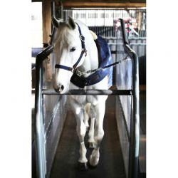 Walker Rug chemise marcheur 160g chevaux Kentucky