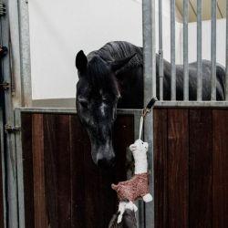 Relax Horse Toy Alpaca jouet peluche box chevaux Kentucky