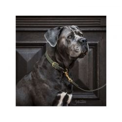 Plaited Nylon Dog Collar collier nylon tressé chien Kentucky